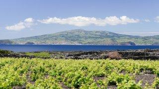 acores pico vigne - voyage portugal açores et madère - terra lusitania