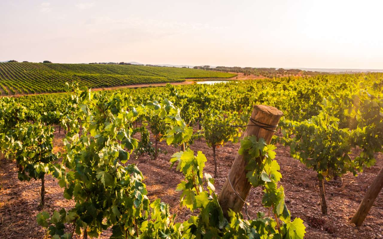 Au coeur des vignes de la Vallée du Tage