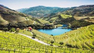 Des caves de Porto aux vignobles du Douro