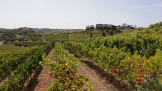 domaine casa santos lima - vallée du tage - voyage portugal