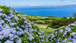 Archipel des Açores : quelle(s) île(s) choisir?