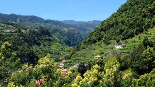 madere vallée mimosas - voyage portugal terra lusitania