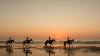 melides chevaux - voyage portugal açores et madère - terra lusitania