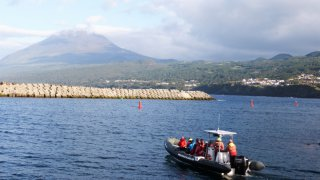 pico baleines - voyage açores - terra lusitania