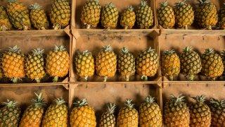 sao miguel ananas - voyage açores - terra lusitania