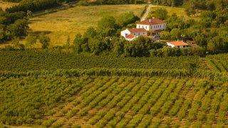 Vallée du Tage: dégustation de vins et visite de domaines