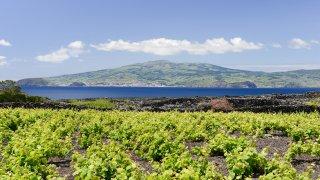 Fêtes, gastronomie et vin aux Açores